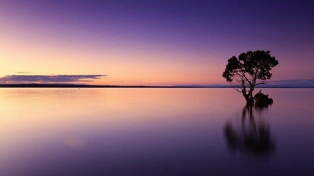 Couché de soleil, arbre au milieu de l'eau